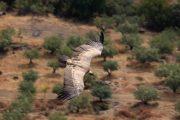Pagayez à la frontière entre le Portugal et l´Espagne au milieu de vautours dans le Parc Naturel du Douro International
