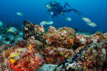 Dive Trip to Cape Verde